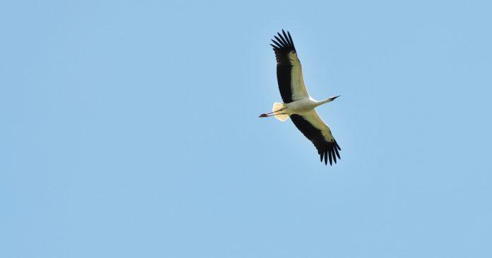 Pasăre în zbor, înălțimea cerului