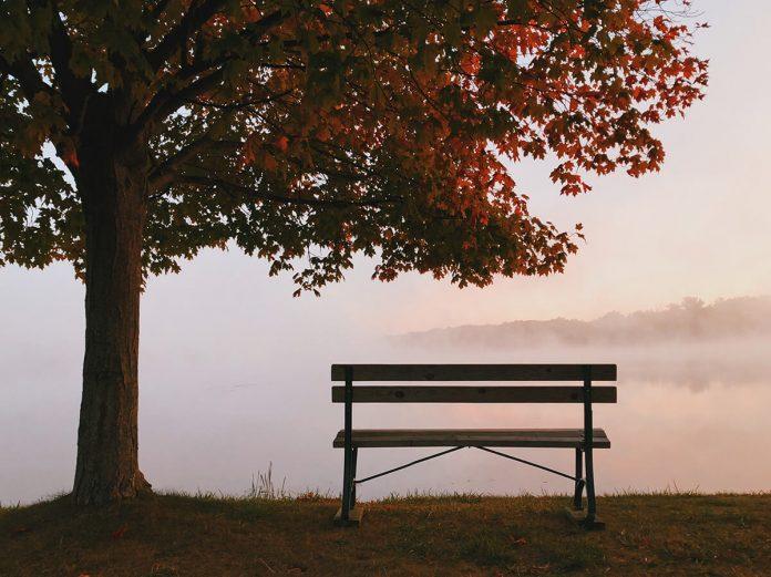 bancă, peisaj, copac, toamnă, singurătate