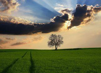 Peisaj, lan, la țară