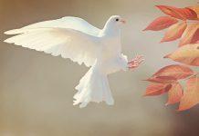 Când trupul și sufletul colaborează armonios, porumbel, pace, liniște
