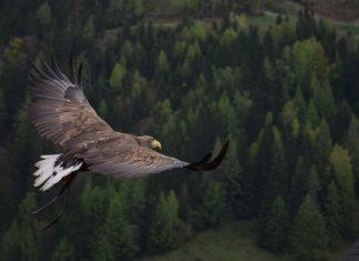 Vultur,înălțime,Iubiți înălțimile, râvniți la cele înalte