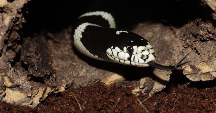 Întrebări capcană, fiți înțelepți ca șerpii, șarpe, otravă