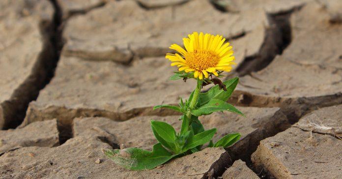 Floare, deșert