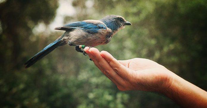 Pasăre,libertate