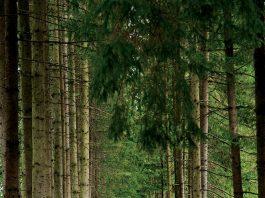 Cărare, copaci, trecere, potecă