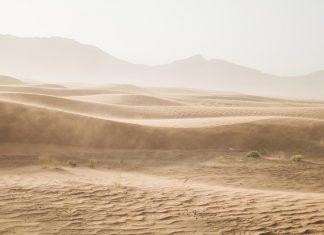Deșert,arid,vegetație
