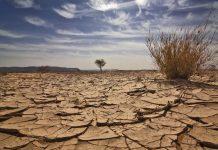 deșsert,iarbă,uscăciune,pustiu