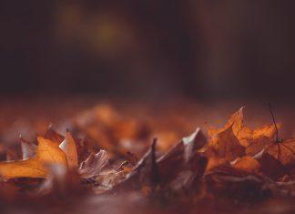 frunze, toamnă, covor, păcate