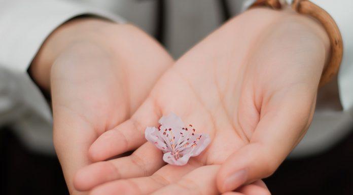 mâini,gingășie,floare,cireș,delicatețe
