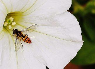 floare, albină, polen, nectar, fapte bune