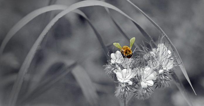 albină,floare,polen