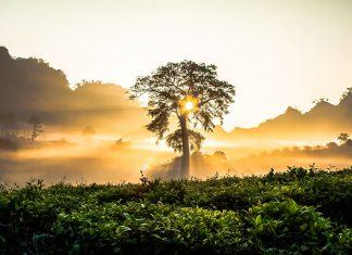 Cer, copac, apus, peisaj
