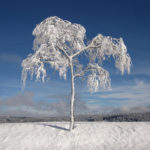 copac, singur, iarna, munte