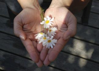 Flori, dar, pace