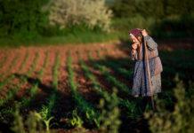 Bătrână, câmp, sapă, muncile pământului