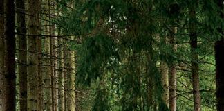 A alungat iubirea și a primit ura, potecă, copaci